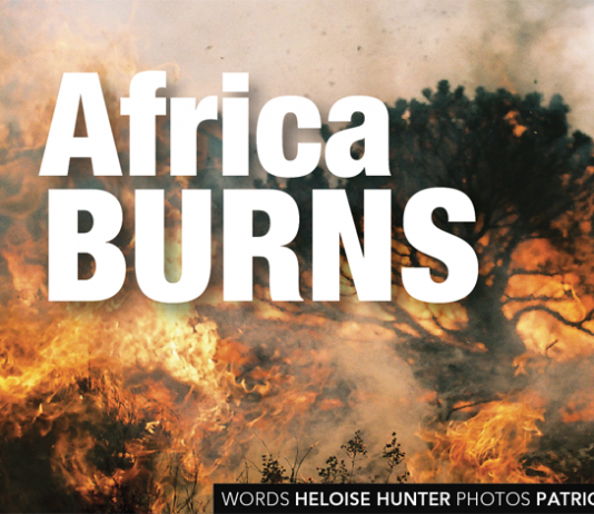 How to survive a veldfire by Heloise Hunter, photo Patrick Ryan/VWS
