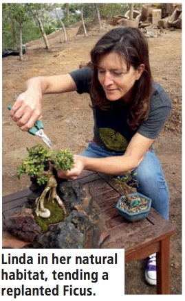 Linda Doke with ficus bonsai