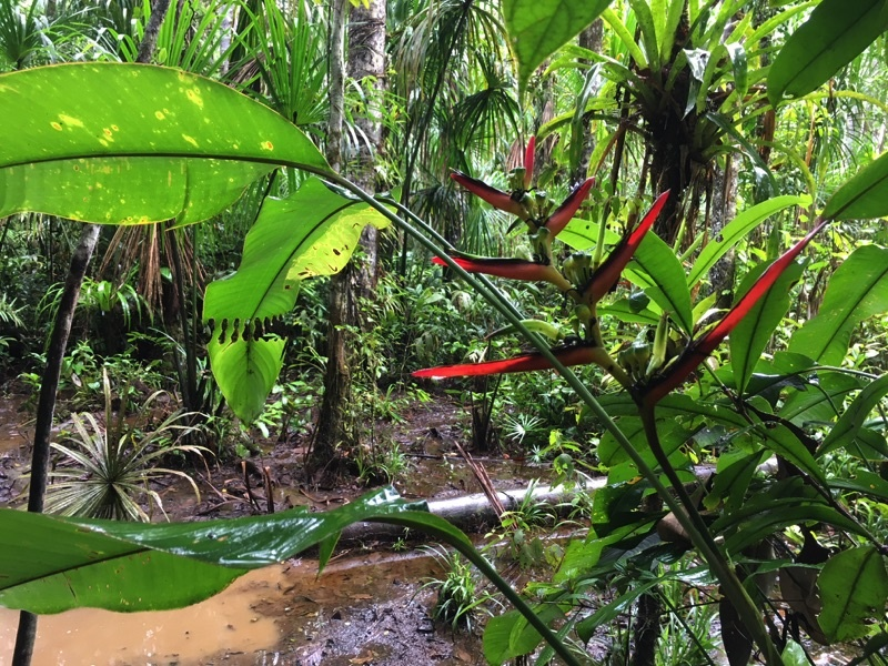 rabies article Heliconia ecuador amazon Deon Braun