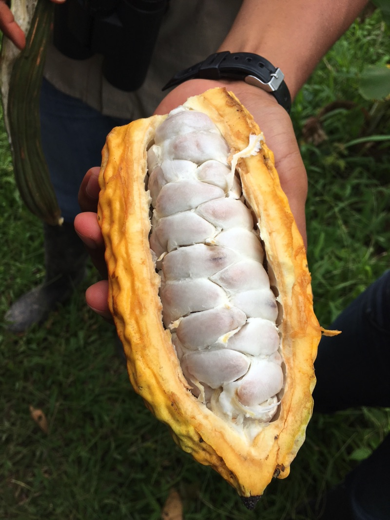 rabies article cacao pod ecuador amazon Deon Braun
