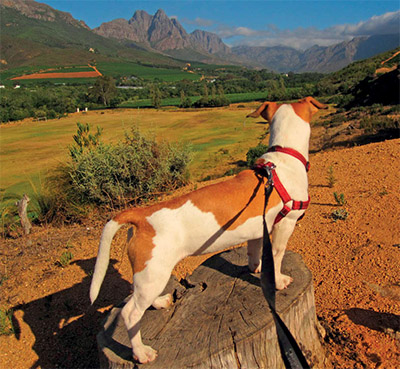 Trail dog Spokie by Jaco Roux TRAIL 29